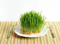 как проращивать зерно для питания