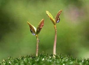 Как правильно употреблять пророщенные ростки