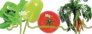 причины дефицита магния в организме