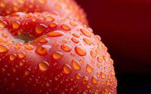 Пищевая ценность помидора