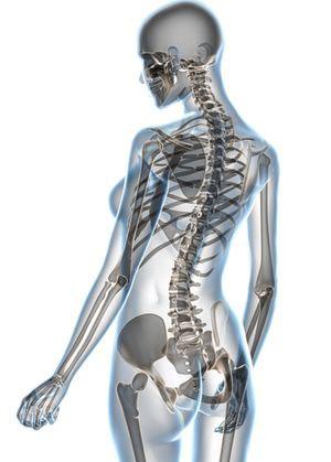 роль кальция в формировании скелета