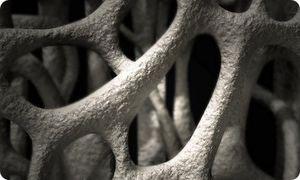 Роль кальция в клетках и в целом организме человека