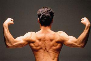 выводы в питании для ваших мышц