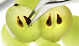 Польза косточек от винограда