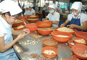 Обработка орехов кешью