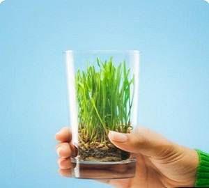 Травяные сборы от алкоголизма