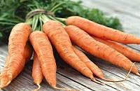 Калорийность моркови сырой