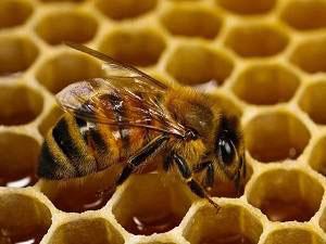 """""""Суперпродукты"""" пчеловодства"""