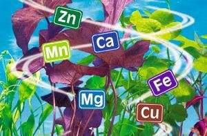 Химический состав ламинарии