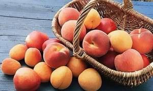 Правила выбора и хранения персиков