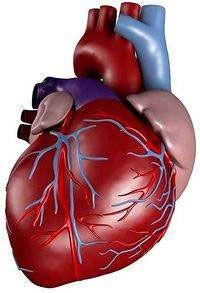 витамины для укрепления сердечно сосудистой системы