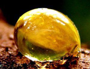 использование янтарной кислоты против похмелья
